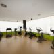 eliptica y cinta progress fitness